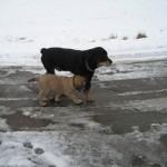 2009-02    -16.02.2009 erster Spaziergang