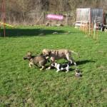 Bild 11     20.03.2009    1.mal Hundeschule