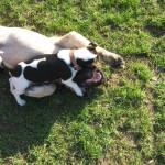 Bild 12    20.03.2009 Hundeschule