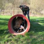Bild 13    20.03.2009 Hundeschule