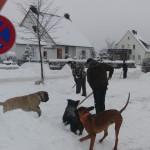 Dez. 2009  ...  Schnee