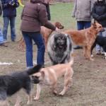 2-Hundeschule