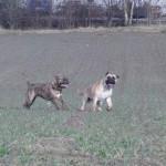 05- Elli und Duke