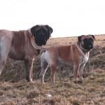 07 ... Buddy und Duke